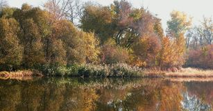 Colorful autumn trees in autumn. Colorful autumn trees over the river and reflection in water during the autumn period royalty free stock images