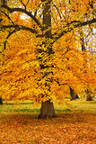 Colorful autumn trees in park Royalty Free Stock Images