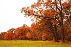 Colorful autumn trees in park Royalty Free Stock Photography