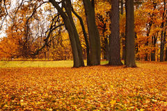 Colorful autumn trees in park Stock Image
