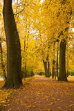 Colorful autumn trees in park Royalty Free Stock Photos