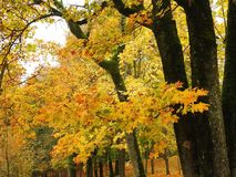 Colorful autumn trees in park. Lithuania stock image