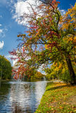 Colorful autumn trees in the park by the river Stock Photo
