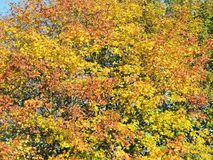 Colorful autumn trees pattern Royalty Free Stock Photos