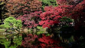 Colorful autumn trees with pond in Hibiya Park, Tokyo, stock video