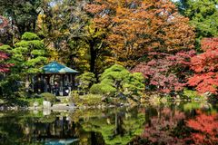 Autumn in a garden in the center of Tokyo. Colorful autumn trees with pond in Hibiya Park, Tokyo, Japan. Autumn in a garden in the center of Tokyo Royalty Free Stock Photography