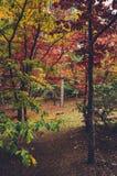 Colorful autumn trees shot on vintage film Stock Photos