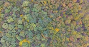 Colorful Autumn Trees Tops stock video footage