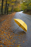 Colorful autumn trees and umbrella on country road. Colorful autumn trees and umbrella on a winding country road Royalty Free Stock Photography