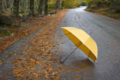 Colorful autumn trees and umbrella. On a winding country road Royalty Free Stock Image