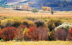 Colorful autumn trees in upland field Stock Photography