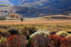 Colorful autumn trees in upland field Royalty Free Stock Photography