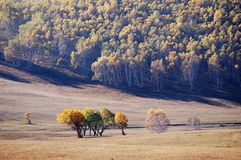 Colorful autumn trees in upland field Stock Photos