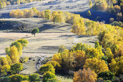 Colorful autumn trees in upland field Stock Photo