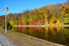 Colorful autumn trees with water reflection Stock Images