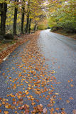 Colorful autumn trees on a winding road stock photography