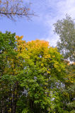Colorful autumn treetops Royalty Free Stock Photo