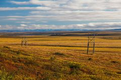 Colorful autumn tundra Stock Photography