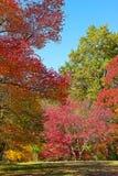 Colorful autumn. In US National Arboretum, Washington DC Royalty Free Stock Images