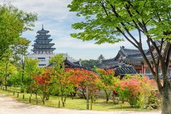 Colorful autumn view of garden at Gyeongbokgung Palace in Seoul. South Korea. Beautiful tower of the National Folk Museum of Korea is visible on blue sky stock photography