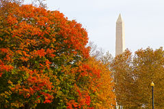 Colorful autumn in Washington DC Stock Photography