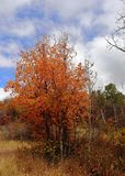 Colorful Autumn in Wolf Mountains of Utah ! stock photography
