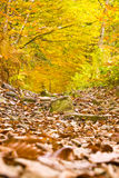 Colorful autumn in woodland. Autumn in forest. Colorful woodland Royalty Free Stock Images
