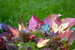 Colorful autumnal background Royalty Free Stock Photography