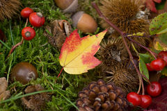 Colorful autumnal background Stock Images