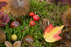 Colorful autumnal background Royalty Free Stock Photo
