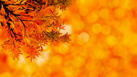 Colorful autumnal background with  leaves Royalty Free Stock Images