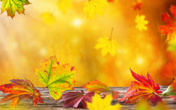 Colorful autumnal background with leaves Royalty Free Stock Photography