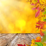 Colorful autumnal background with leaves Stock Photos