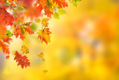 Free Colorful Autumnal Background With Leaves Royalty Free Stock Images - 59724979