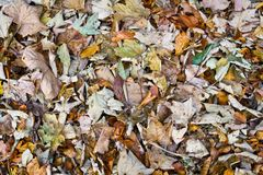 Colorful autumnal foliage background Stock Photo