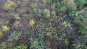 Colorful Autumnal Forest. Aerial footage flying over the tops of colorful autumnal trees stock video