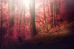 Colorful autumnal forest in the mythical Mount Olympus - Greece royalty free stock images