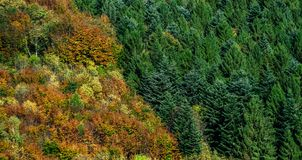 Colorful autumnal forests in Alsace, France Royalty Free Stock Image