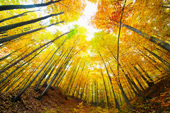 Colorful autumnal landscape Royalty Free Stock Photo
