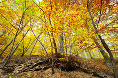 Colorful autumnal landscape Stock Image