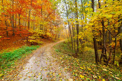 Colorful autumnal landscape Royalty Free Stock Image