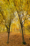 Colorful autumnal landscape Royalty Free Stock Photography