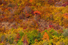 Colorful autumnal landscape. In a forest with deciduous trees Royalty Free Stock Images