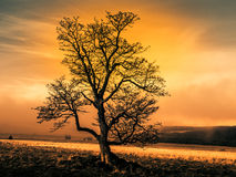 Colorful autumnal landscape after rain with beautiful tree, mist and blue sky. Dramatic evening scene at sunset time Stock Images