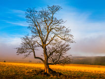 Colorful autumnal landscape after rain with beautiful tree, mist and blue sky. Dramatic scene Stock Photo