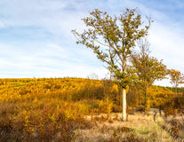 Colorful autumnal landscape with trees, road and forest Royalty Free Stock Photos