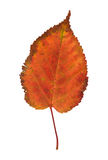 Colorful autumnal leaf Stock Photos