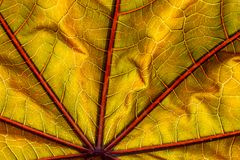 Colorful autumnal leaf close-uptexture background stock photography