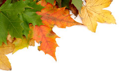 Colorful autumnal leaves Royalty Free Stock Photo