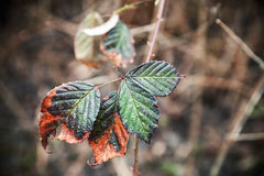 Colorful autumnal leaves, close-up natural photo Stock Photo